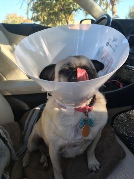 Lucy Liu got a cone head