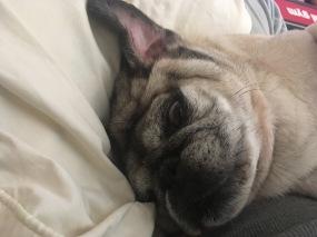 Bam-Bam's nap interrupted