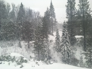 View of the trees from The Amtrak Train.