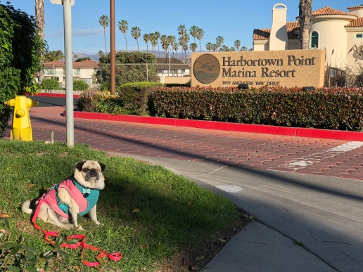 Lucy in front of Harbortown Point Marina Resort & Club