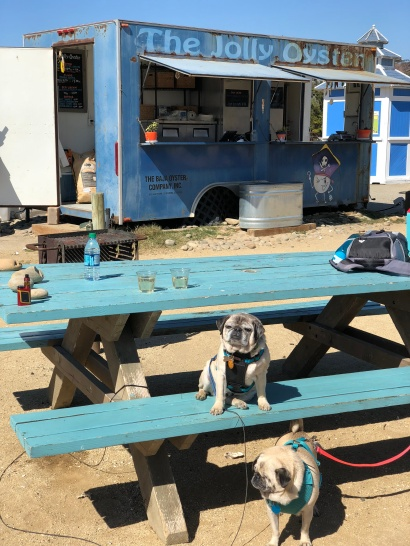 Hanging out with the dogs at The Jolly Oyster